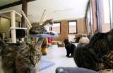 Belgique -  Un couple achète une maison pour ses chats