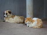 Belgique -  chats et de chiens abandonnés et euthanasiés