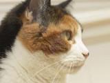 Canada - VANCOUVER Un tueur de chats recherché