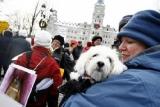 Canada - Euthanasie des chiens et chats: non aux chambres à gaz