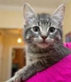 Stephen Harper demande aux Canadiens de trouver un nom pour son chat
