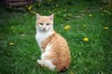 Canada - Interdire la vente d'animaux dans les animaleries