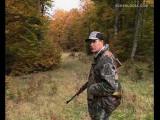 Belgique -  Un chasseur belge tue en moyenne cinq chats par an.