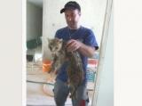 Suisse - Des ouvriers à Vernier sauvent une chatte prisonnière d'une canalisation