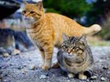 Les îles à chats au Japon
