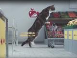 Les chats font leurs courses au supermarché (Publicité Netto)