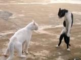 Les chats Ninjas existent!