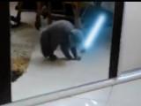Les chats Jedi existent!