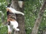 Une chatte aide son chaton à descendre d'un arbre