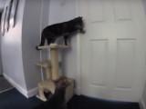 Un chat ouvre une porte