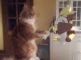 Les chats aussi chassent les pokemons!