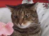 Un chat avec une réaction bizarre