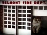 Le chat mascotte de la caserne de pompiers
