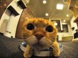 Les cafés à chats (neko café)