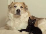 Un chien et trois chatons dorment ensemble
