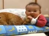 Un petit garçon mord la queue de son malheureux chat