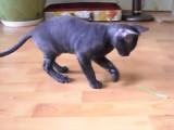 La double utilité d'un brin d'herbe pour un chat