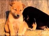 Compilation de chiens et chats qui luttent contre le sommeil