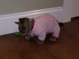 Un Minskin en pyjama