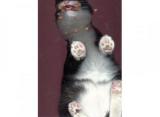 La place d'un chat? Sur un scanner!
