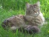 Une jeune autiste sort de son isolement grâce à la présence de son chat