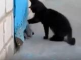 Un chaton sauve un canichebloqué!