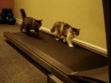 Ces chats sportifs courent sur tapis roulant!