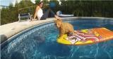 Un chat qui nage dans une piscine