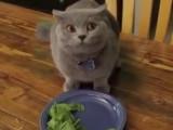 Un chat mangeur de salade ?