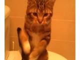 Un chat danseur