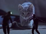 Kittens on the beat : Des chatons qui protègent des chaussettes