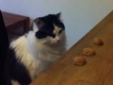 Un chat très intelligent qui joue (et gagne) au bonneteau