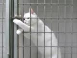 Un chat réussit à ouvrir sa cage