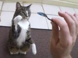 Didga, un chat ninja qui va vous étonner