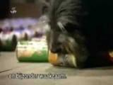 Le chien et le chat sont malins dans cette publicité