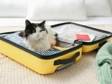 Voyager avec son chat à l'étranger : règles pays par pays