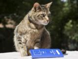 Le passeport européen pour chat