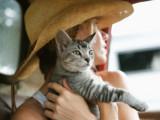 Comment réduire le stress de votre chat en voiture ?