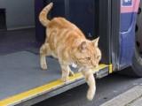 Prendre le bus ou voyager en car avec son chat