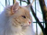 Mettre son chat en pension : les pensions félines