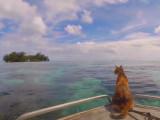 Une fille, un voilier et… un chat