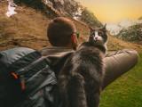 La randonnée avec son chat, mode d'emploi