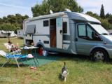Comment voyager en camping-car avec un chat ?