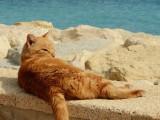 Comment protéger son chat contre la chaleur et le soleil