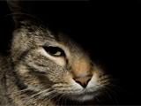 La persécution des chats dans l'Histoire