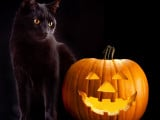 Les superstitions et légendes sur les chats à travers les âges