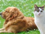 Animaux de compagnie : le chat détrône le chien comme meilleur ami de l'homme