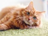 10 idées reçues sur le chat