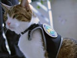 Tests ADN pour chat : les félins peuvent jouer un rôle important dans la résolution de crimes