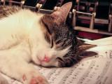 Les chansons et comptines autour des chats